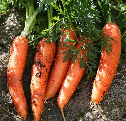 фото моркови - как хранить Как хранить морковь Морковь how to store carrot