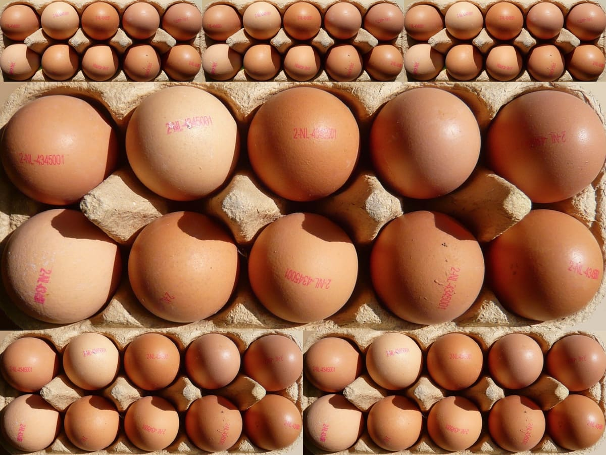 как хранить куриные яйца как хранить яйца Яйца kurinnye yaitsa kak hranit