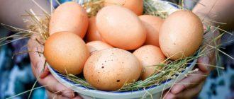 Как хранить домашние куриные яйца  Миндаль domashnie kurinnye yaitsa kak hranit 330x140