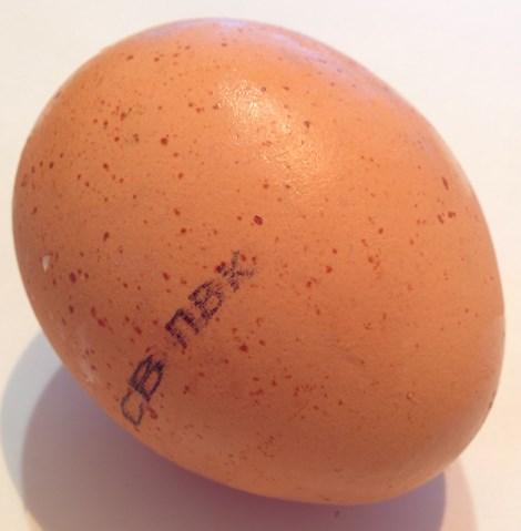 срок годности вареных яиц Срок годности яиц вареных Срок годности яиц вареных egg