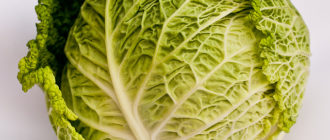Печень savoy cabbage 330x140