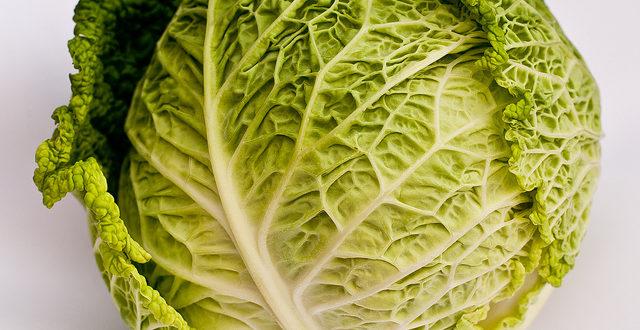 Савойская капуста Савойская капуста: выращивание и уход savoy cabbage 640x330