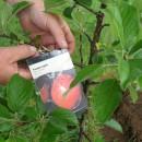 Как хранить саженцы яблони до посадки Как хранить саженцы яблони до посадки apple tree before planting 130x130