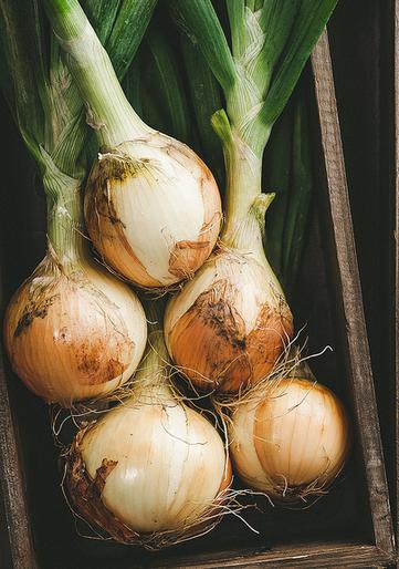 хранить лук Лук how to store onion