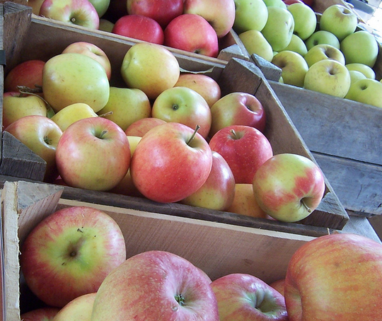 winter-apple-varieties-stored-until-spring
