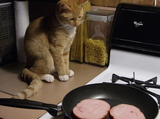 Сосиски cat ham