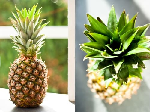 Ананас kak hranit ananas 001