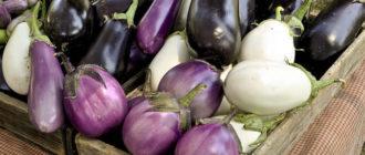 Как хранить баклажаны  Как хранить утиные яйца для инкубации kak hranit baklazhany 330x140