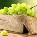 Виноград kak hranit vinograd 120x120