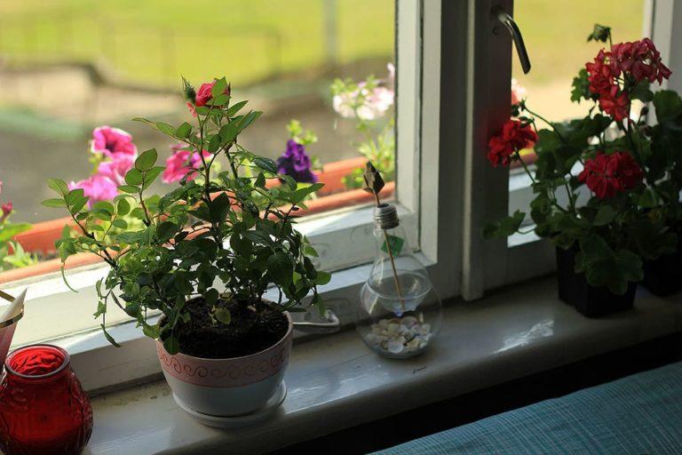 Сохранить розы домашних условиях