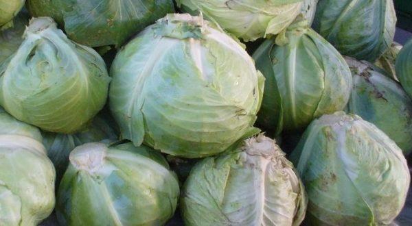 Как хранить капусту  Капуста kak hranit kapustu 600x330