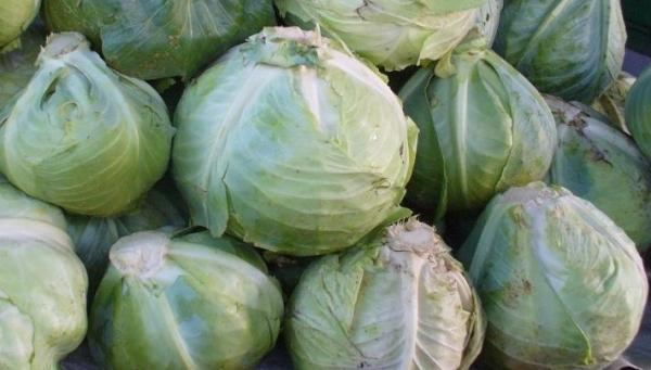 Как хранить капусту  Капуста kak hranit kapustu
