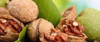 Как хранить грецкие орехи  Как хранить грецкие орехи kak hranit grezkie orehi 330x140