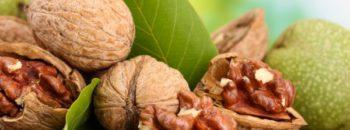Как хранить грецкие орехи  Как хранить грецкие орехи kak hranit grezkie orehi 350x130