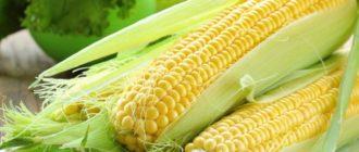 Как хранить кукурузу  Как хранить корм для собак kak hranit kukuruzu 330x140