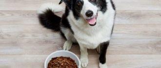 Как хранить корм для собак kak hranit korm dlya sobak 330x140
