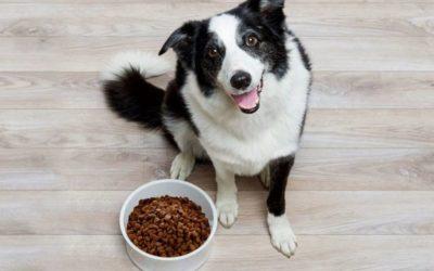 Как хранить корм для собак  Главная kak hranit korm dlya sobak 400x250