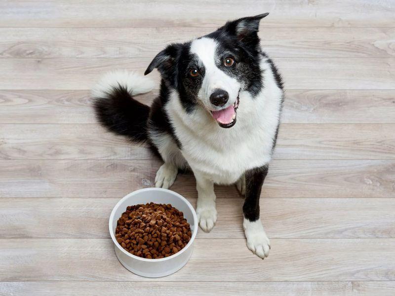 Как хранить корм для собак  Как хранить корм для собак kak hranit korm dlya sobak