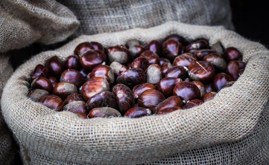 Орехи съедобного каштана  Орехи съедобного каштана kak hranit kashtany syedobnye