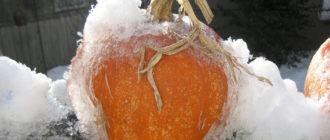 Заморозка тыквы tykva kak zamorozit 330x140