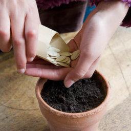 Посевные семена тыквы tykva posevnye semena hranenie 256x256