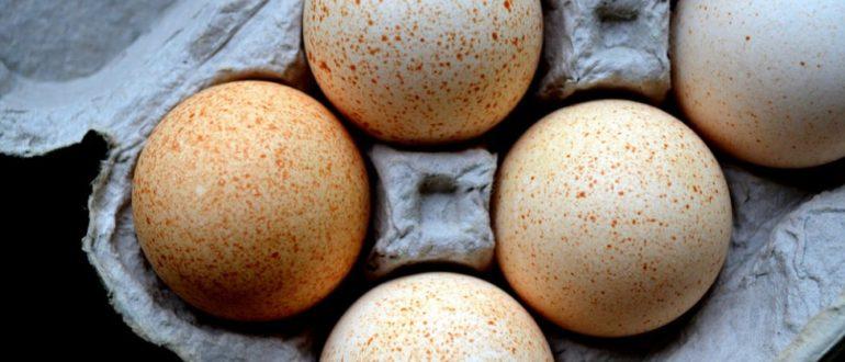 Как хранить индюшиные яйца  Индюшиные яйца indushinye yaitsa 770x330