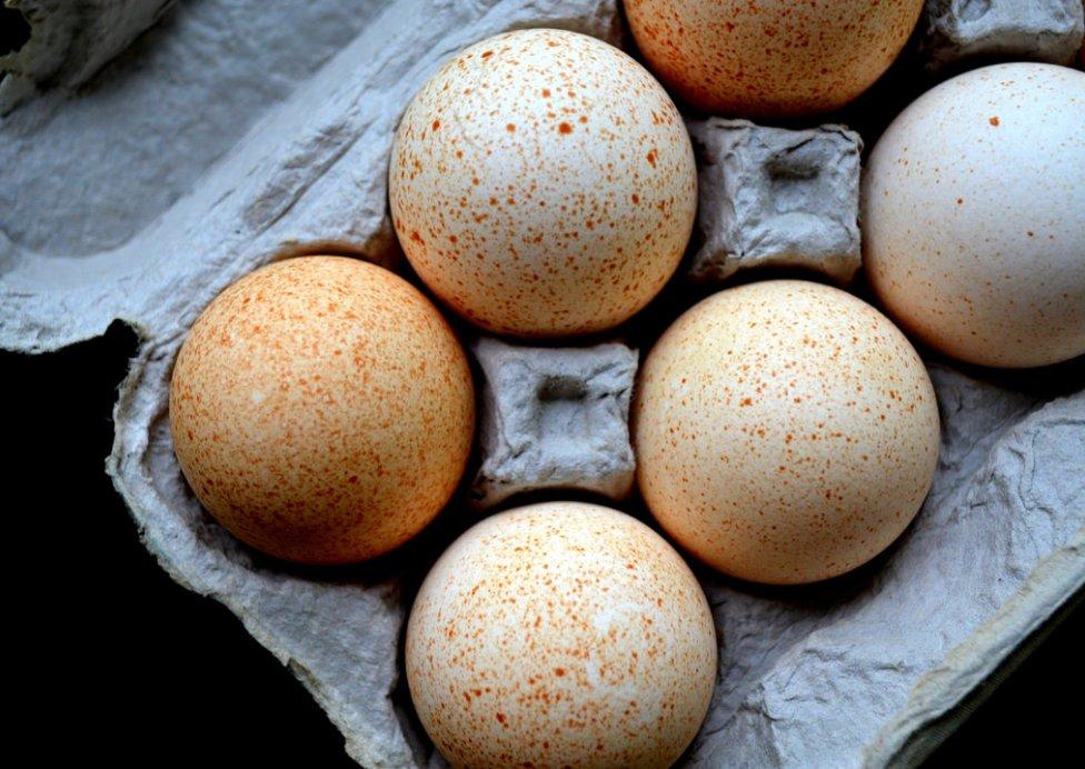Индюшиные яйца  Индюшиные яйца indushinye yaitsa