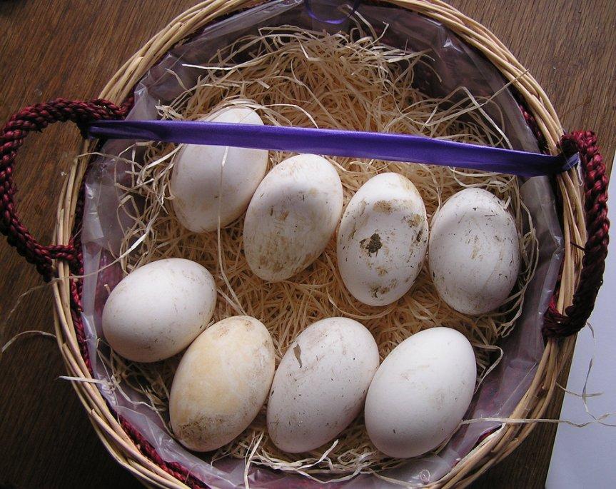 Как хранить гусиные яйца  Как хранить гусиные яйца khraneniye gusinykh inkubatsionnykh yaits