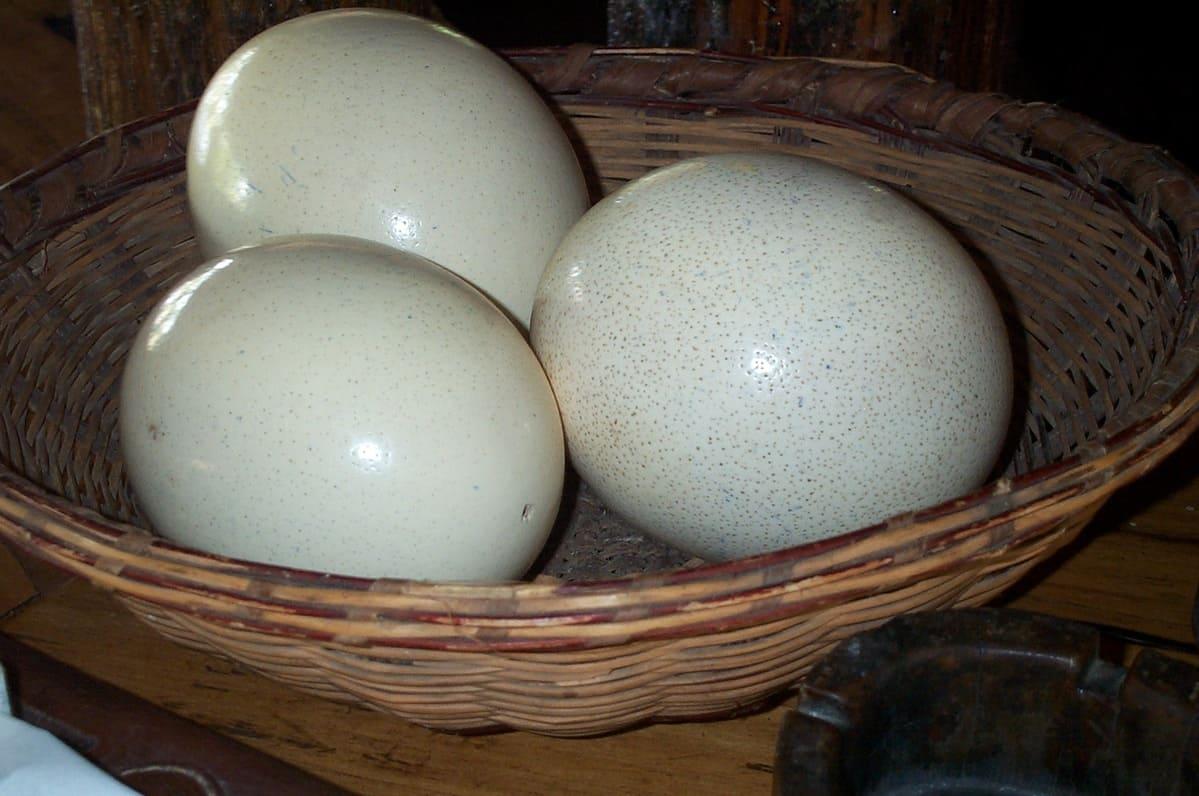 Страусиные яйца  Страусиные яйца strausinye yaitsa kak hranit