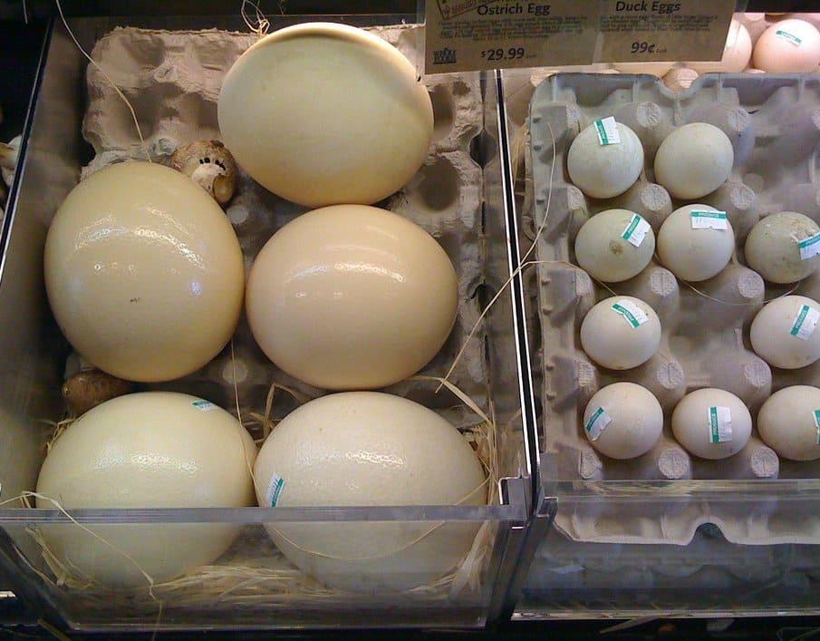 Срок годности страусиного яйца  Страусиные яйца strausinye yaitsa srok godnosti