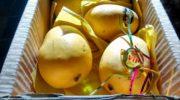 Как хранить манго  Как хранить манго 04 mango kak hranit srok godnosti 180x100